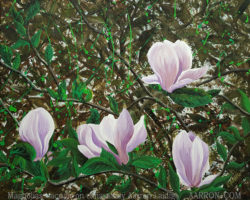 Magnolias painting by Aarron Laidig